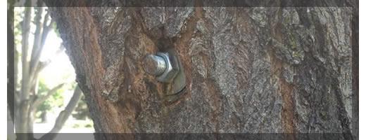 CablingBracingServices