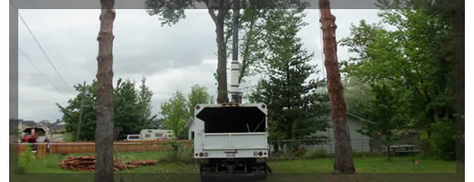 TreeRemovalServices